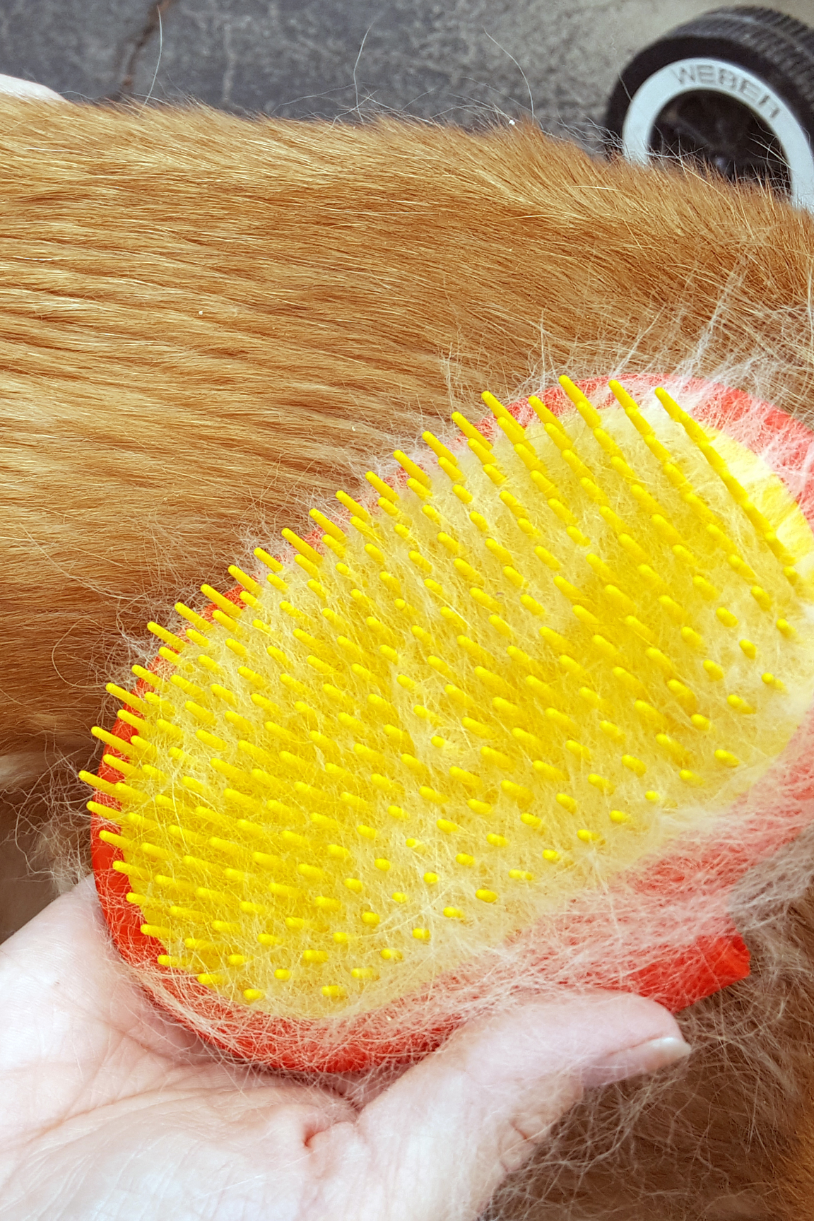 Power through any type of fur to collect loose hair.
