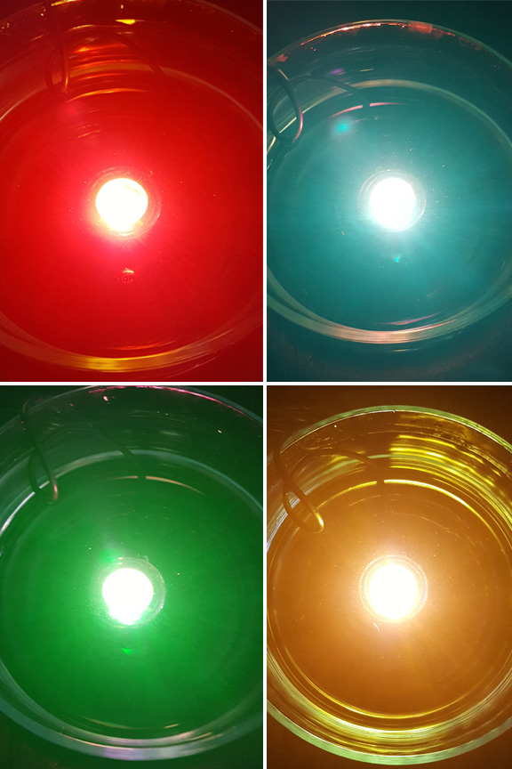 Detail view. Swap lenses to switch from clear to yellow, red, blue or green.